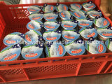 Linea di produzione del yogurt della latteria di Trun-Tasto