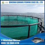 Elevação do Tilapia de Nigéria da gaiola da rede do rio do lago