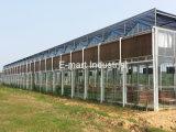 Pista caliente de la refrigeración por evaporación de la venta con el marco para la granja avícola