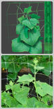 Rete 100% di sostegno della pianta dell'HDPE per il cetriolo