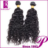 Vente Cheap Bundles de Wet et de Wavy Remy indien Hair Weft