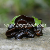 Alimento salutare di legno Fungus dell'orecchio del nero superiore del grado