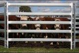 Comitati del bestiame da 16 FT 4-Gauge/comitati saldati resistenti del bestiame del bestiame