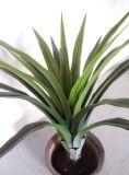 Piante conservate in vaso simulate ambientali verdi di Spathiphyllum Kochii
