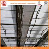Landwirtschafts-multi Überspannungs-Glasgewächshäuser für Gemüse/Garten