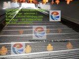 Máquina de lavar elevada da fruta e verdura do pulverizador Dup-5000
