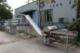 Radiateur Automatique Carottes Découpe Lavage Peeling Polissage Ligne de Production de Séchage
