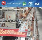 Il pollo professionale di strato di disegno mette in gabbia il fornitore