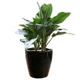 Outdoor & Indoor FRP / Fiberglass Flower Pot