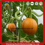 Farina organica del nocciolo dei semi di zucca del fornitore