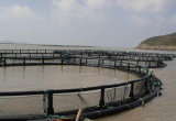 HDPE釣ケージの海Aquaculatureのための浮遊栽培漁業のケージ