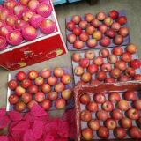 ¡Venta caliente! Qinguan rojo fresco Apple