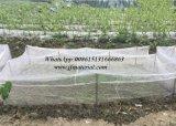 100%년 HDPE 농업 반대로 곤충 그물