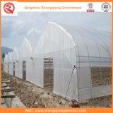 Agricultura/casas verdes túnel comercial da película do PE para a morango/Rosa
