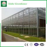 Tipo serra di vetro di Venlo per la piantatura gli ortaggi/fiori
