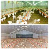 Автоматическое оборудование снабжения жилищем цыплятины для цыпленка бройлера