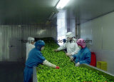 Congelador de IQF para vegetais e frutas