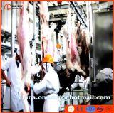 Matadouro dos carneiros com linha completa da chacina do gado dos equipamentos
