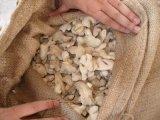 Начало Yunnan китайского сухого имбиря все