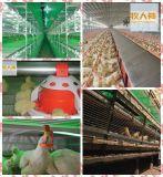 Matériel de ferme avicole avec la construction préfabriquée de Chambre pour le service sur un seul point de vente