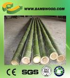 Rohe trockene Bambuspolen