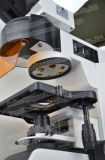 Microscopio vertical de la Epi-Fluorescencia FM-Yg100 con G, B, BV, V, filtros de U
