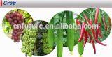 Organisches lösliches Kalium Humate des Düngemittel-95%