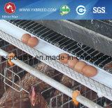 La volaille posent la cage