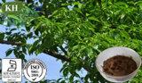 Chlorogenic Zuur van uitstekende kwaliteit 5%-98% van het Uittreksel van Eucommia Ulmoides door HPLC
