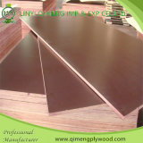 12mm 15mm 18mm Poplar Core Film Faced Plywood dans Hot Sale