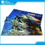 Professional Perfect Binding Full Color Catalog Design Printing
