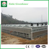 꽃 또는 과일 또는 야채 차양 시스템을%s 가진 성장하고 있는 유리제 녹색 집