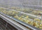 自動鶏の家禽はおりに入れる若めんどりおよび小さい鶏(タイプフレーム)のためのおり装置を