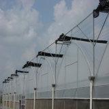 Invernadero de la Plástico-Película de Multispan de la alta calidad para Growing vegetal