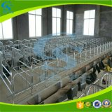Хавронья клети Swine клетей беременность свиньи защищая