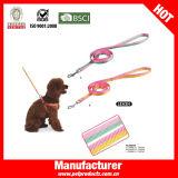 중국 도매 개 가죽끈 도매 (YL83569)