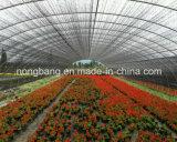 Stuoia nera tessuta la Cina di controllo di Weed