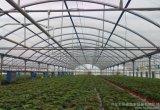 Polybonate 온실은을%s 가진 농업 뜰을 만들기를 위한 강철 프레임을 강화한다