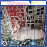 Venda quente da gaiola do coelho ou da gaiola do animal