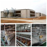 Camera prefabbricata dell'azienda agricola di strato con le gabbie del pollo di Automaitc
