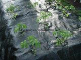 Cubierta de tierra plástica agrícola de Weed de la tela oscura de la barrera
