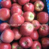 新しいQinguan Appleの高品質のための中国の製造者