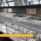Un type cages automatiques à plusieurs niveaux de couche à vendre
