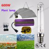 HP élevés de la lampe 600W E40 de sodium de sortie de lumen