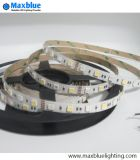 DC24V 12mm 96LEDs/M 5050 RGBW Flexible LED Strip Light
