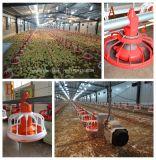As aves domésticas livres do projeto controlam o equipamento da vertente da fábrica com construção vertida