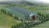 China-einzelnes doppeltes Film-Gewächshaus mit ISO