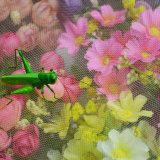 5m 백색 색깔 반대로 곤충 그물 온실을%s 반대로 진디 메시 곤충 그물