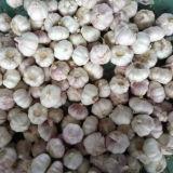 Scatola che imballa aglio bianco normale (4.5cm ed aumentano)
