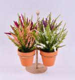 Flor colorida de la espuma de la aguja del pino con los crisoles